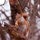 Got a nut???? by Josef Pittner