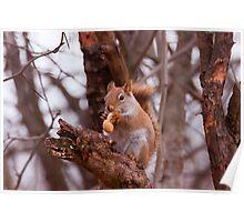 Got a nut???? Poster