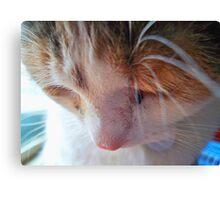 Sad Kitty Canvas Print