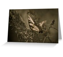sweet sepia Greeting Card