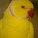 Yellow Bird by vasu