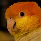 Beautiful Birds - 2011 by vasu