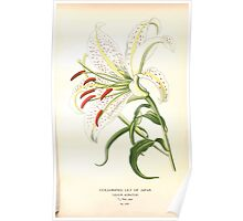 Favourite flowers of garden and greenhouse Edward Step 1896 1897 Volume 4 019 Gold Rayed Lily of Japan1 Poster