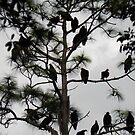 Tree full of Buzzards by nobettertime