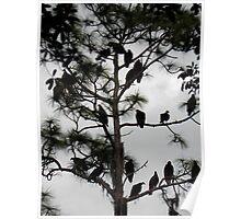 Tree full of Buzzards Poster