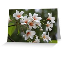 Tung Oil Tree Flowers - Mercer Arboretum Greeting Card