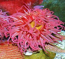Jelly Fishy Thingey by Chelei