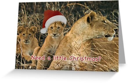 'Cuz we need a little Christmas... by Owed to Nature