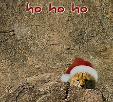 Ho ho ho from a little cheetah by Owed To Nature