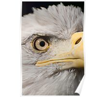 American Eagle - detail of eye Poster
