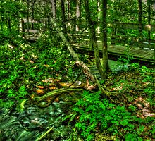 Tranquility Trail by Rob  Kirk