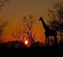 African Sunset... by Carisma