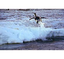 Emperor Penguin 'Flying' Home Photographic Print