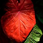 Red Elephant Ear Leaf by Jordan Miscamble