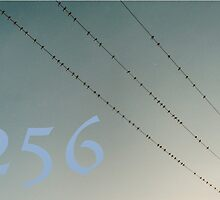 256 with birds by kate18a