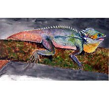 """""""Boyd's Forest Dragon - male"""" Photographic Print"""