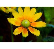 Yellow Petals!!! © Photographic Print