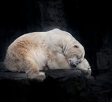 Sleeping Polar Bear by Tom Grieve