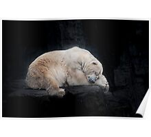 Sleeping Polar Bear Poster