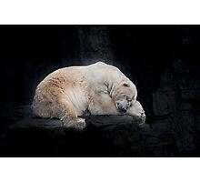 Sleeping Polar Bear Photographic Print