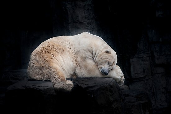 Sleeping Polar Bear by Tom Grieve