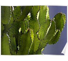 Cactus Highrise Poster