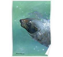Seal's visit Poster