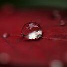 Silver Raindrop  by Kym Howard