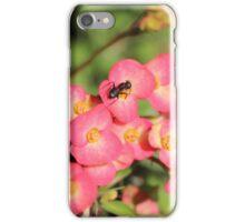 """Ant"" Euphorbia iPhone Case/Skin"