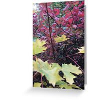 Autumn Colour collection Greeting Card