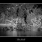 Birds at Night by poinsiana