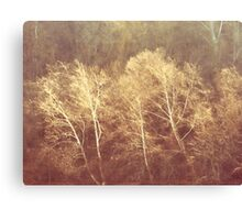 Ghost Trees III Canvas Print