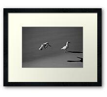 Seagulls Black and White Framed Print
