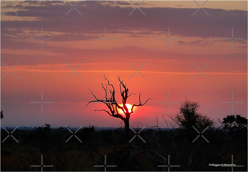 SATARA SUNSET IN THE KRUGER NATIONAL PARK by Magriet Meintjes