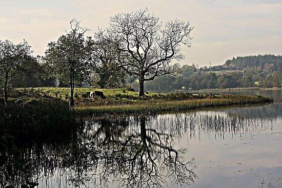 Town Lake by Julesrules