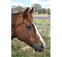 The chesnut mare again Photographic Print