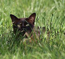 Peeping Tom! by shortshooter-Al