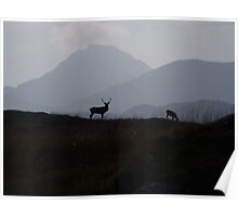 One Stag and his hind, Isle of Rum Poster