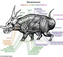 Styracosaurus Muscle Study by Thedragonofdoom