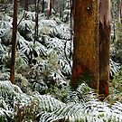 rainforest snow by Tony Middleton