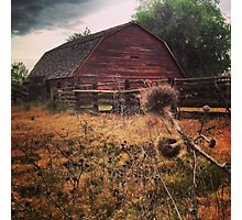 Rustic Red Barn surrounded by Thistles  Photographic Print