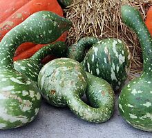 Green Stripe Pumpkins by VikaL
