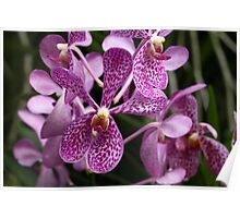 Singapore Orchids 2 Poster