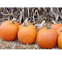 Orange pumpkins Photographic Print