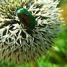 Scarab Green by Paul Revans