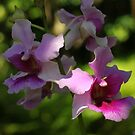 Singapore Orchids 8 by beeden