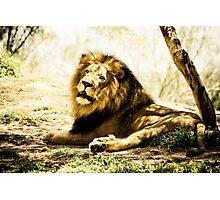 LionEyes Photographic Print