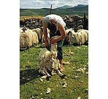Sheep sheering, Isle of Skye, Scotland, UK, 1990s Photographic Print