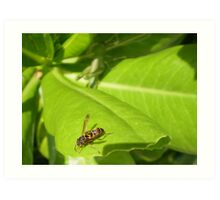 Fly insect Art Print