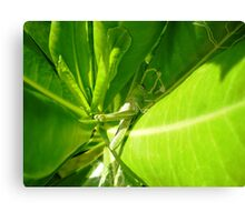 Grasshopper insect Canvas Print